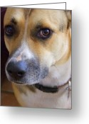 Kauai Dog Greeting Cards - Bella Greeting Card by Mary Deal