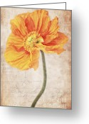 Flower Picture Greeting Cards - Bella orange Greeting Card by Angela Doelling AD DESIGN Photo and PhotoArt