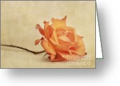 Copper Greeting Cards - Bellezza Greeting Card by Priska Wettstein
