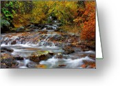 Brooks Greeting Cards - Below the Waterfall Greeting Card by Tim Reaves