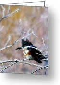 Red Birds Greeting Cards - Belted Kingfisher  Greeting Card by Jeff  Swan