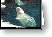 Beluga Greeting Cards - Beluga Whale Poster Greeting Card by Angelina Vick