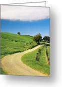 Color Bending Greeting Cards - Bend In The Road Near Ferndale, West Gippsland, Victoria, Australia Greeting Card by Peter Walton Photography