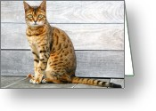 Camera Greeting Cards - Bengal Cat Sitting On Weathered Deck Greeting Card by Itsabreeze Photography