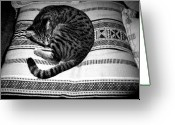 Black And White Photos Pyrography Greeting Cards - Bengal Catnap Greeting Card by Fareeha Khawaja