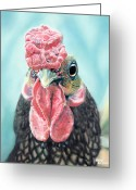 Photorealism Greeting Cards - Benny the Bantam Greeting Card by Baron Dixon
