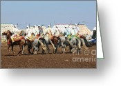 Rabat Greeting Cards - Berber Festival III Greeting Card by Chuck Kuhn