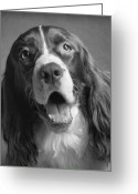 English Springer Spaniel Greeting Cards - Bernie Greeting Card by Ron Schwager