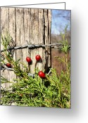 Cedar Fence Greeting Cards - Berries and Barbs Greeting Card by Kristin Elmquist