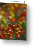 Bittersweet Greeting Cards - Berries and Bokeh Greeting Card by Mary Anne Williams