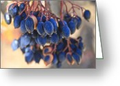 Indiana Autumn Greeting Cards - Berries Blue 2 Greeting Card by Scott Wood