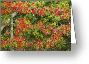 Santa Fe National Forest Greeting Cards - Berries Grow On Leaves Greeting Card by Ralph Lee Hopkins