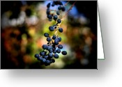 Modern Framed Prints Greeting Cards - Berry Cold Out Greeting Card by Karen M Scovill
