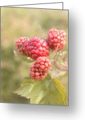 Sweetness Greeting Cards - Berry Good Greeting Card by Kim Hojnacki