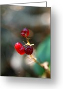 Wildflowers Greeting Cards - Berry Warp Greeting Card by Neal  Eslinger