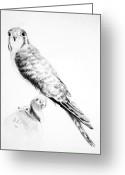 Falcon Drawings Greeting Cards - Best friend Greeting Card by Eleonora Perlic