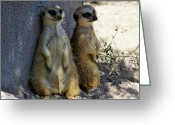 Wildlife Greeting Cards Prints Greeting Cards - Best Friends  Greeting Card by Christopher  Ward