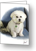 Bichon Greeting Cards - Bichon Sonny Greeting Card by Ferrel Cordle