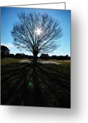 Bare Tree Greeting Cards - Big Bare Tree Against Sunset Greeting Card by Ka_tate
