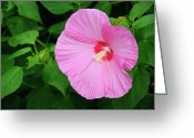 Kansas City Missouri Greeting Cards - Big Bold Pink Beauty Greeting Card by Andee Photography