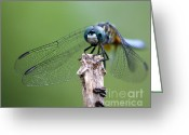 Hunter Greeting Cards - Big Eyes Blue Dragonfly Greeting Card by Sabrina L Ryan
