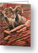 West Pastels Greeting Cards - Big Horn Sheep Greeting Card by Deb LaFogg-Docherty