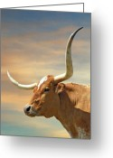 Longhorns Greeting Cards - Big Horns Greeting Card by Robert Anschutz