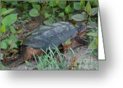 Wood Turtle Greeting Cards - Big Old Turtle Greeting Card by Smilin Eyes  Treasures