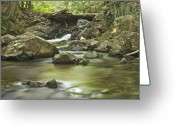 Yellow Dog Greeting Cards - Big Pup Falls 5 Greeting Card by Michael Peychich