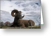Lake Low Country Greeting Cards - Big Ram Greeting Card by Greg Hammond