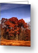 Turning Leaves Greeting Cards - Big Red Greeting Card by Thomas Young