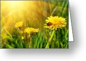 Freedom Digital Art Greeting Cards - Big yellow dandelions in the tall grass Greeting Card by Sandra Cunningham