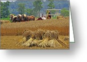 Amish Farms Greeting Cards - Binding The Wheat Greeting Card by Dan Myers