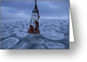 Ice Floes Greeting Cards - Biologists Search For Ice Stained Brown Greeting Card by Maria Stenzel