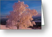 Photographs With Red. Greeting Cards - Birch Greeting Card by Elena Filatova