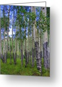 Marks Greeting Cards - Birch Forest Greeting Card by Julie Lueders