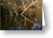 Fall River Scenes Greeting Cards - Birch Lake Reflections Greeting Card by LeeAnn McLaneGoetz McLaneGoetzStudioLLCcom