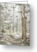 Crest Greeting Cards - Birch Path Woodland Greeting Card by Andrea Hazel Ihlefeld