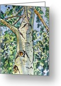 Sketchbook Greeting Cards - Birch Tree Sketchbook Project Down My Street Greeting Card by Irina Sztukowski