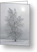Scenary Greeting Cards - Birch with hoarfrost  Greeting Card by Elena Filatova
