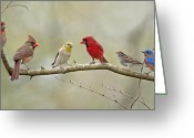 House Finch Greeting Cards - Bird Congregation Greeting Card by Bonnie Barry
