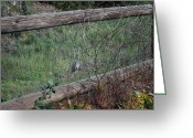 Split Rail Fence Greeting Cards - Bird in a Cage Greeting Card by Franklin Hanna