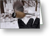 Glove Greeting Cards - Bird in the Hand Greeting Card by Joshua House