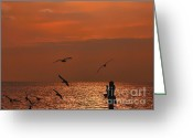 Stock Photography Greeting Cards - Bird Meets Birds Greeting Card by Graham Taylor