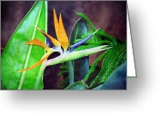 Garden Decoration Mixed Media Greeting Cards - Bird of Paradise Greeting Card by Andee Photography