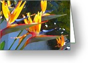 Bird Of Paradise Greeting Cards - Bird of Paradise Backlit by Sun Greeting Card by Amy Vangsgard