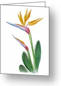 Watercolor By Irina Greeting Cards - Bird of Paradise Card Greeting Card by Irina Sztukowski