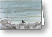 Ocean Tapestries - Textiles Greeting Cards - Bird on the Shore Greeting Card by Carolyn Doe