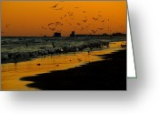 Texas.photo Photo Greeting Cards - Bird Sunset II Greeting Card by James Granberry