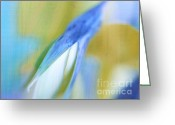 Fine Art Flower Photography Greeting Cards - Birdflower Abstract Greeting Card by Irina Wardas